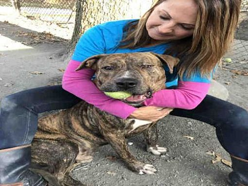 Pin On Help Shelter Dogs
