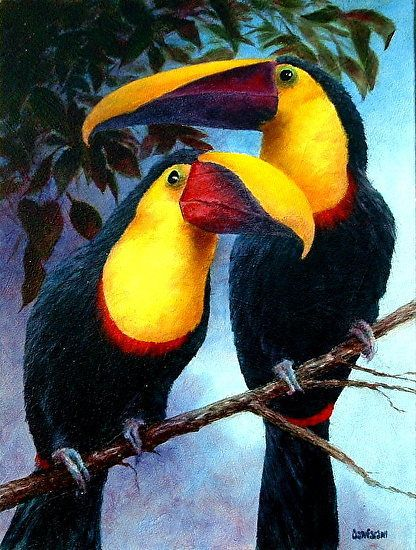 Birds from Paradise Series - Swainson's Toucan by Alfred Cianfarani Oil ~ 24 x 18