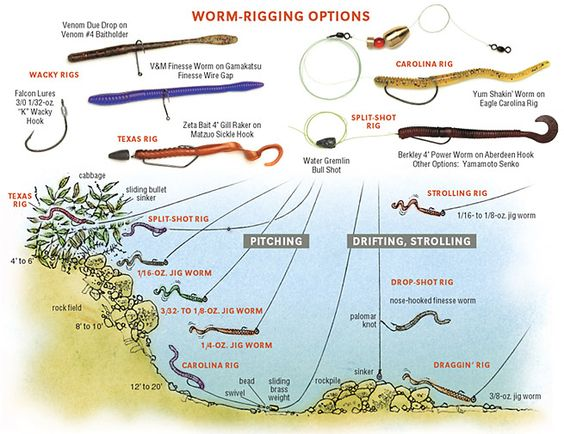 The smallmouth worm is different i 39 m not the world 39 s most for Bass fishing worms