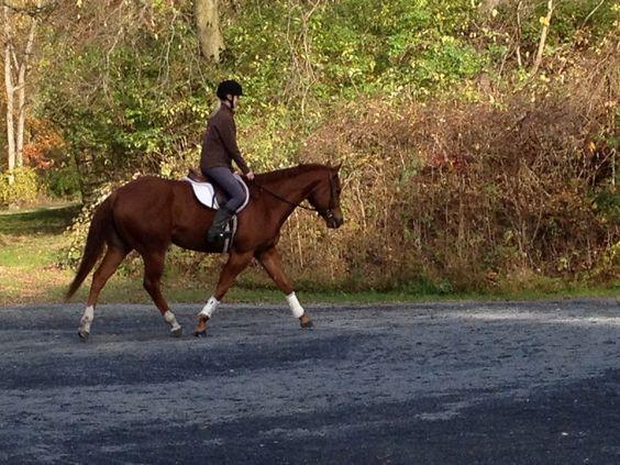 Moving my assets - Quarter Horse - Hunter