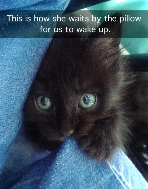 Wakey Wakey 29 Funniest Cats To Brighten Your Day Cat Kittens Pets Animals Cute Funny Paw Funniest Cat Memes Cute Baby Animals Cute Funny Animals