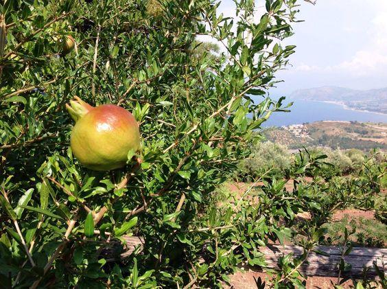 Melograni / Pomegranates