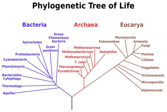 Tree of life az let megjelense a fldn the emergence of life tree of life az let megjelense a fldn the emergence of life on earth pinterest ccuart Gallery