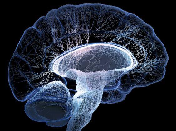 La découverte récente des chercheurs de l'institut des neurosciences cellulaires et intégratives à Strasbourg (INCI) pourrait être une étape importante...