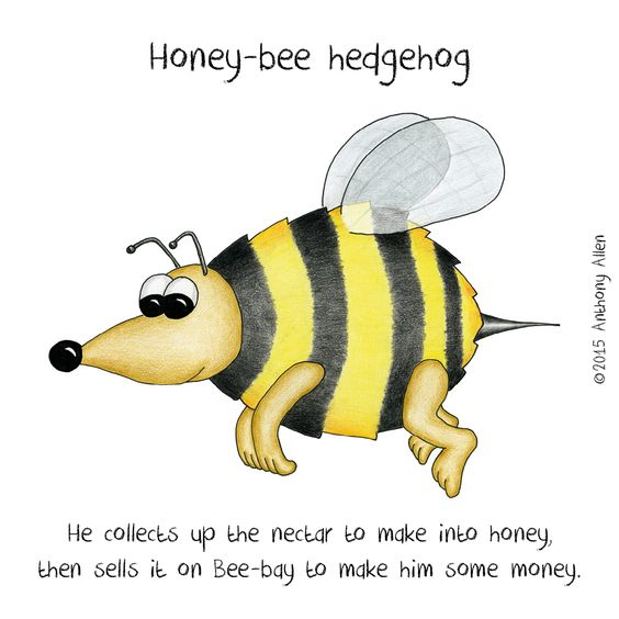 Honey-bee hedgehog - Ever seen one of these in your garden?