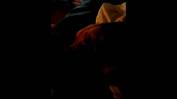 My dog hates when my boyfriend plays the harmonica.