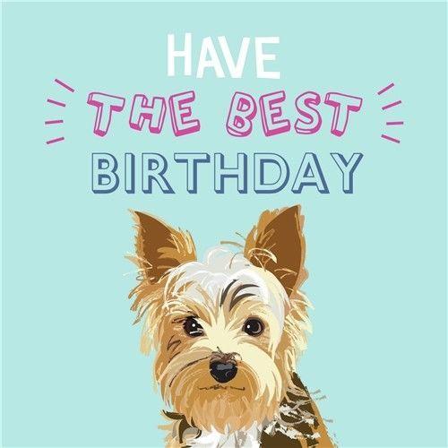 Pin By Nena Jansen On York Dog Birthday Card Yorkshire Terrier Yorkie Yorkshire Terrier