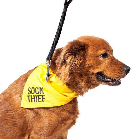 Sock Thief Bandana
