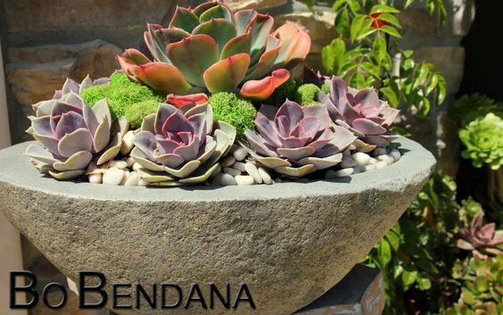succulent arrangement - Google Search