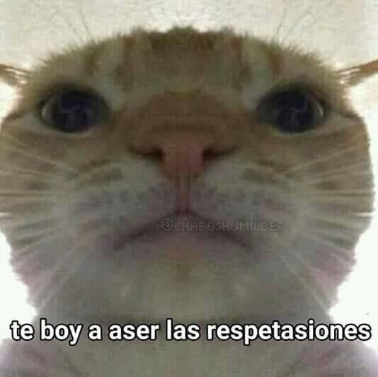 305 Melhores Ideias De Meme De Gato Gatinhos Fofos Gatos Gatinhos