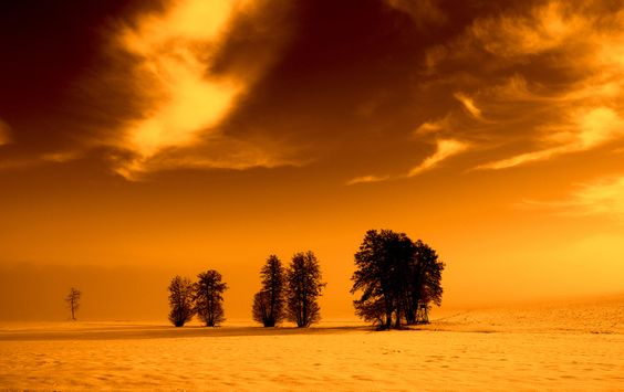 winter trees by Tom Magnum on 500px