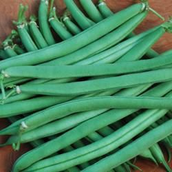 Provider Organic Snap Bean Seed Packet - Heirloom Seeds - NO GMO - Non-Hybrid