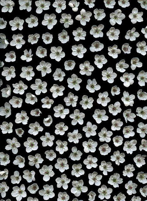 Flores blancas | Pattern floral | Pinterest | Patrones ...