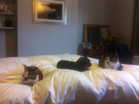 Our 3 lovely cats