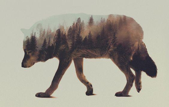 Stunning Double Exposure Animal + Wilderness Portraits