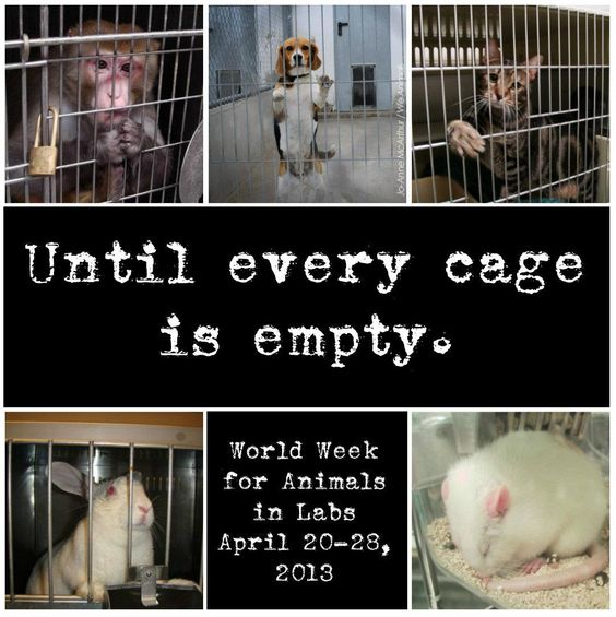 How many animals are abused every day?