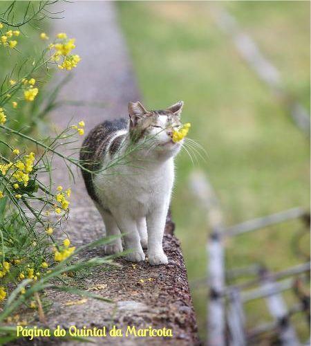 """""""Com liberdade, flores, livros e lua, quem não seria inteiramente feliz?"""" [Oscar Wilde]...Que tenhamos uma boa quinta-feira!"""