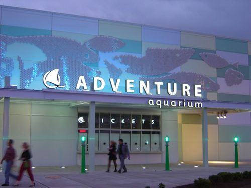 Adventure Aquarium In Camden Nj My Home State New