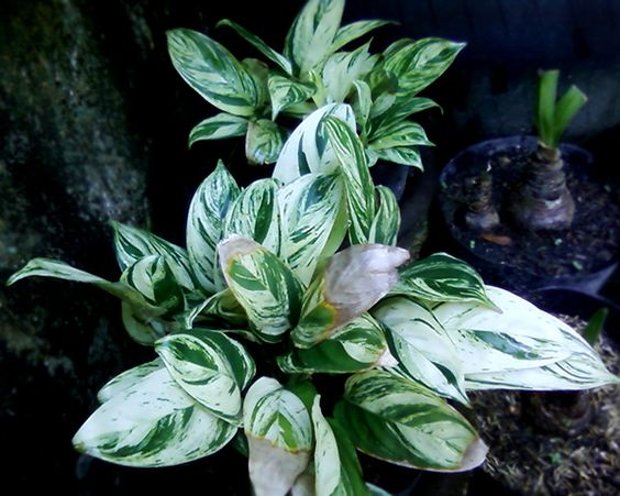 Collection Of Various Ornamental Plant Gardening