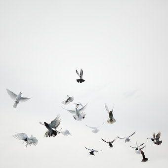 Photocase - 'flügelschläger' ein Foto von 'jala'