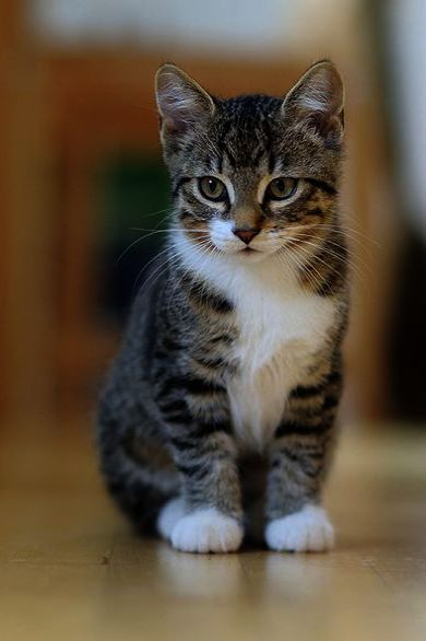 Terrific Cats And Kittens Facts Collect Cute Cats Cute Cats Photos Kitten Pictures