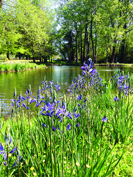 Oklahoma water and lakes on pinterest for Plants around ponds