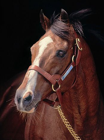 Northern Dancer (1961-1990) Canadian-bred Thoroughbred ...