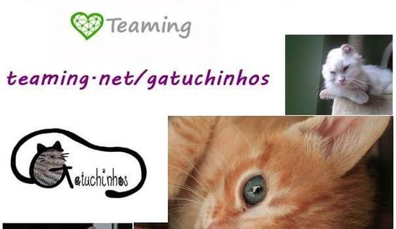 www.teaming.net/gatuchinhos