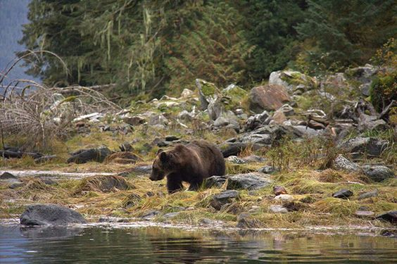 Great Bear Rainforest Stream. The Great Bear Rainforest agreement has been decades in the making. Art Sterritt said,