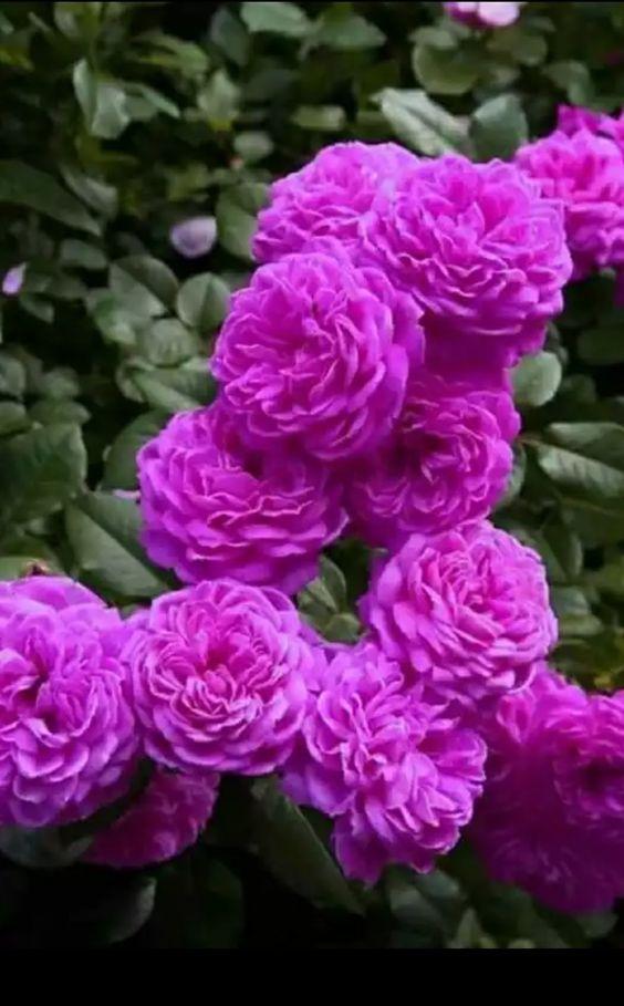 ~Flowers Flowers ~