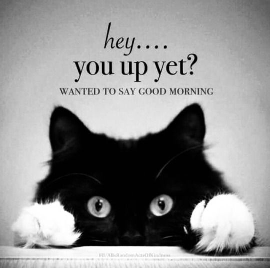 Good Morning Good Morning Good Morning Meme Funny Good Morning Memes Funny Good Morning Quotes