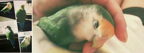 QQ my lovebird