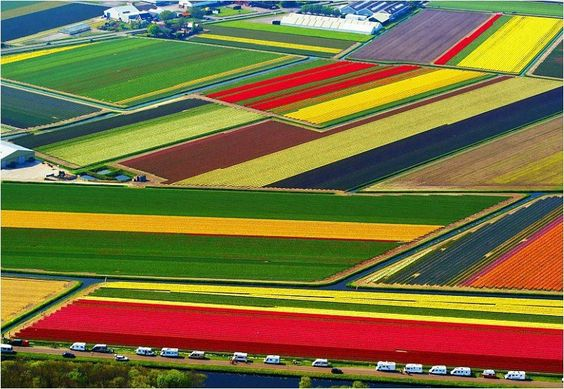 Tulip National Farm, Netherlands.