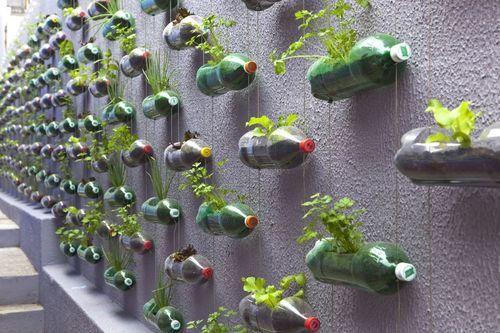 Soda bottle plant holders