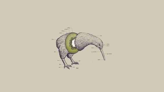 kiwi dsgn