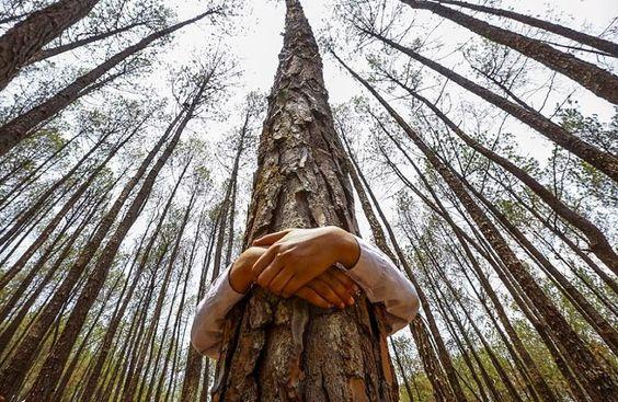 """""""Treehugger"""" (abrazadores de árboles) es un término que se utiliza como un insulto contra los ambientalistas, pero que felizmente han adoptado. Es una manera notoria que muestra que una persona se preocupa por los árboles. Pero científicos aseguran que abrazar árboles vale mucho más que eso."""