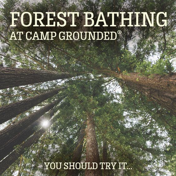 forest-bathing