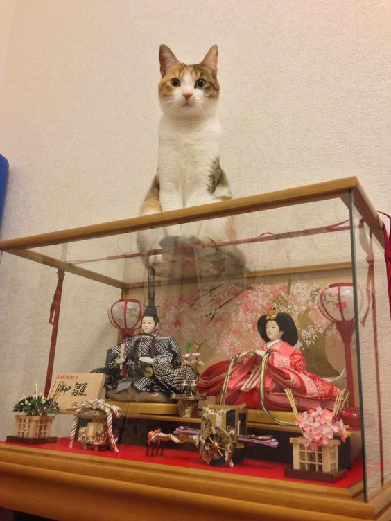 mounted HINA dolls