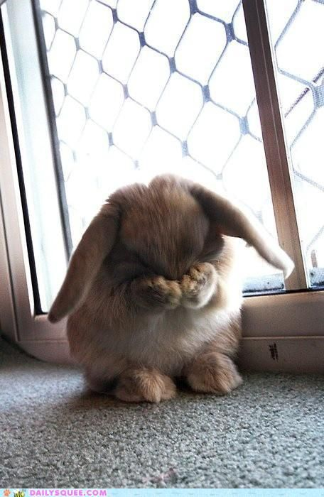 this bunny is totally face rubbing worthy *sigh*