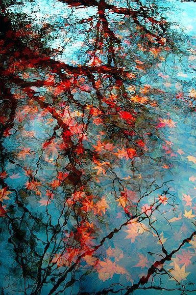 Fall Reflections in Water: