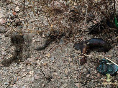 by Ayre Journalist Giulietto Chiesa is sure that the information about the burial places of civilians' bodies found near Donetsk,...