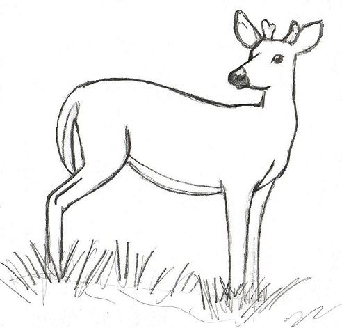 deer antlers drawing easy - photo #28