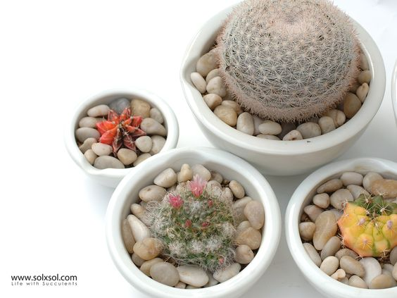 A lovely Cactus.  サボテン