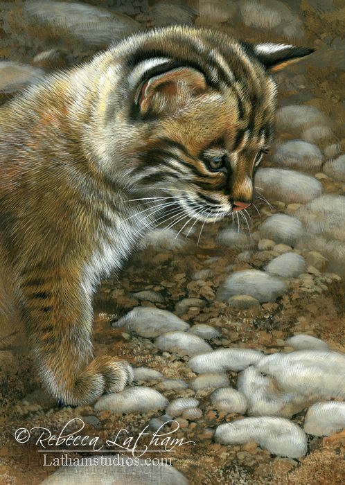 Stop and Watch – Bobcat Kitten, 5in x 7in, watercolor on board with sterling silver, ©Rebecca Latham