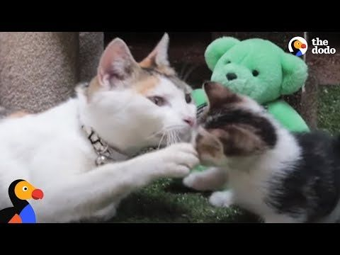 Heartbroken Kittens Begging For Help But It S A Miracle When