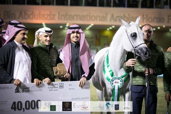 بيبيتا تواصل توهجها وتحقق أعلى نقاط البطولة لليوم الأول من مهرجان الأمير سلطان العالمي 2020 للجواد العربي In 2020 Arabian Horse Arabians Horses