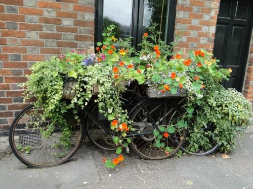 Beautiful! I wish I could make something like this work, but... still beautiful. (container gardening).