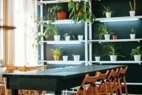 盆栽界的「超級負離子機」!家裡只要養一盆,就能把壞空氣吸光光!!