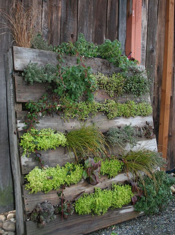 Shipping pallet vertical garden. I'm thinking strawberries would be a great choice.