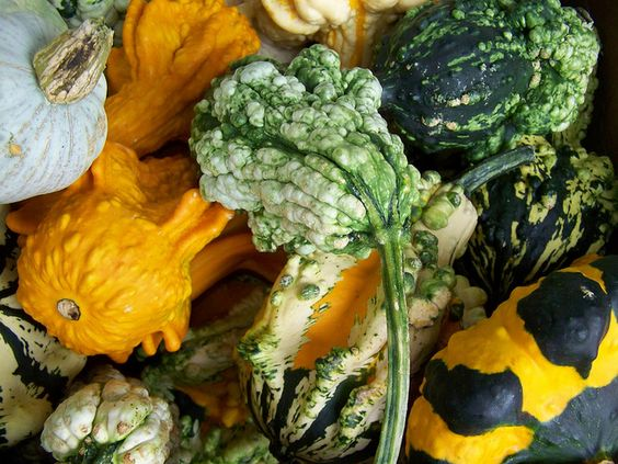 Gremlin Gourds These Are Bright Bold And Crazy With